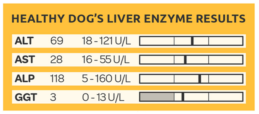 Hepatitis In Dogs From Symptom Of Liver Disease In Dogs